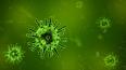 Ученые ИТМО: В реке Новой уровень вредных бактерий ...