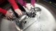 В Выборгском районе маленькая девочка проглотила магниты
