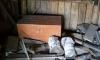 На Алтае тела пропавших детей нашли в соседском сундуке