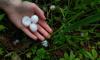 В Красносельском районе прошел град размером с перепелиные яйца