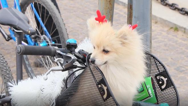 Петербуржец за серийную кражу велосипедов и скутеров сядет в тюрьму на 11 лет