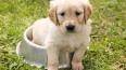 Эксперты назвали лучшие сухие корма для собак