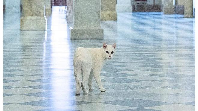 """""""Лапок не хватает"""": эрмитажный кот Ахилл запустил челлендж и просит присоединиться"""