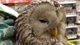 В Ленобласти женщина спасла сову от стаи ворон