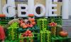 """В Гатчине прошел первый областной фестиваль фермерской продукции """"СВОЁ"""""""
