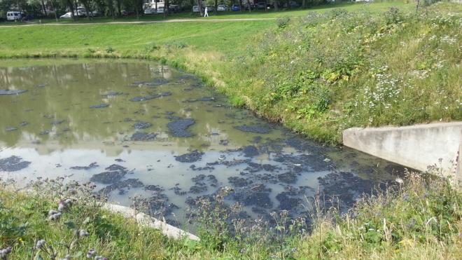 Жители Кировского района жалуются на невыносимые запахи с реки Новой