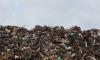 На границе Петербурга экологи нашли две свалки