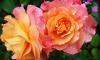 На Дворцовой завершен фестиваль цветов: выбраны лучшие флористы