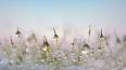 Рабочая неделя в Петербурге начнется с дождя и снега