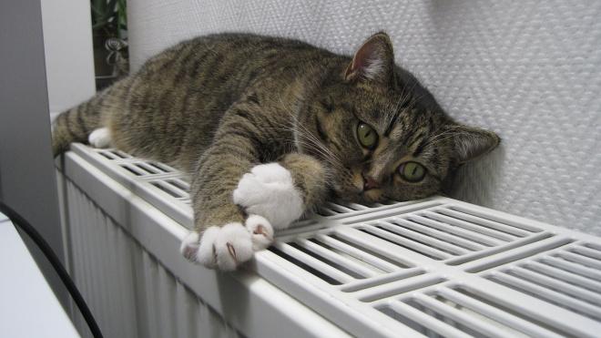Смольный планирует бесплатно установить датчики подачи тепла в квартирах петербуржцев