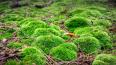 В лесу под Лугой оперативники нашли схрон с оружием