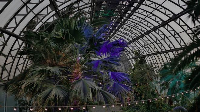 Оранжерея Таврического сада вернулась к работе после прорыва трубы