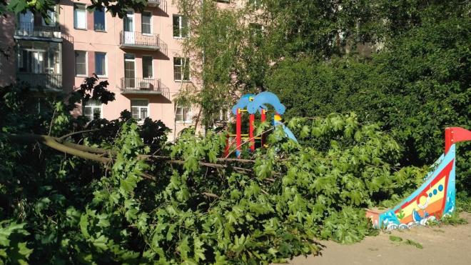 На углу Новочеркасского проспекта и Рижской улицы упало дерево на детскую площадку