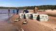 Волонтеры выпустили на просторы Финского залива еще ...