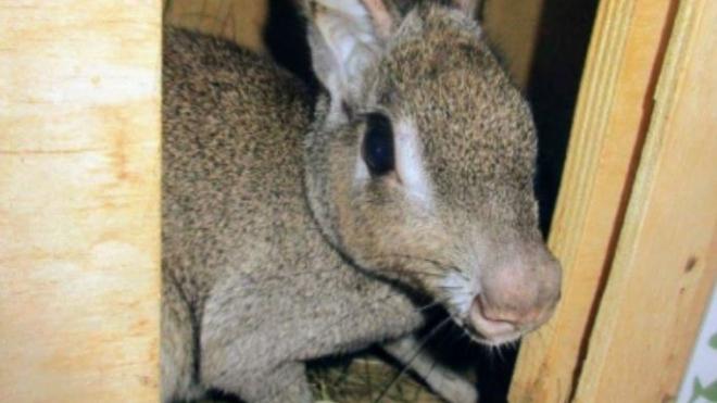 К маленьким жителям Петербурга прилетели родственники зайца
