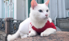 Эрмитажный кот Ахилл предвидит победу сборной Бразилии в матче против Коста-Рики