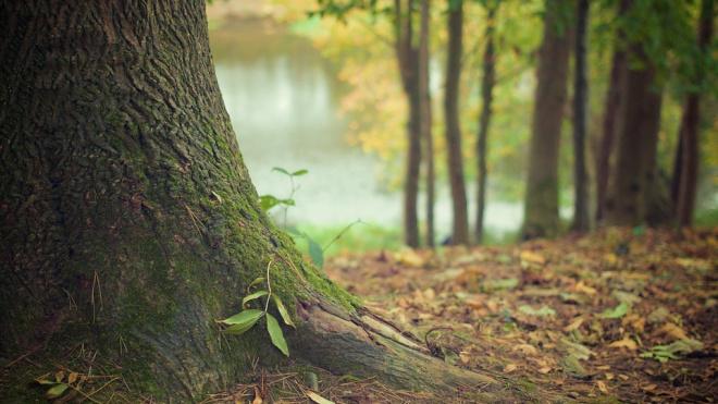 Скелет пропавшей женщины нашли в лесу Приморского района