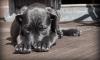 В 2018 году в Петербурге чипировали почти 700 бездомных собак