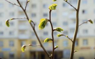 К выходным в Петербурге потеплеет до +14 градусов