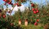Петербургские депутаты намерены контролироватьсельское хозяйство