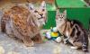 В Ленинградском зоопарке умерла домашняя кошка Дуся