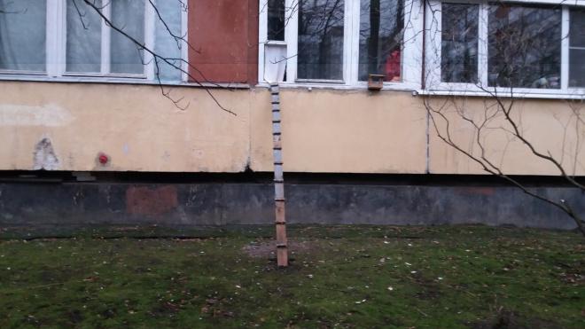 Фото: петербуржцы обустроили выход для кошки на улицу через окно