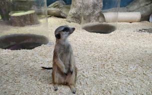 """Трогательный запрет. Почему контактные зоопарки уходят в """"образование"""""""