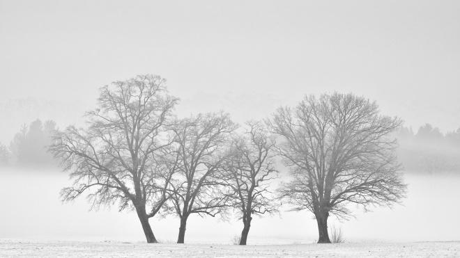 В четверг в Петербург придут туман и небольшой снег