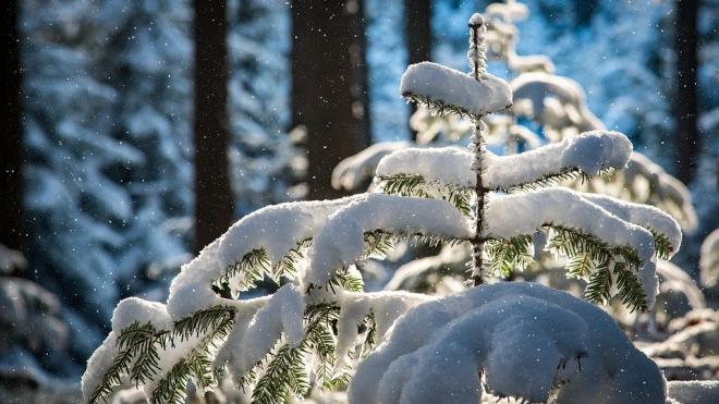 МЧС: 21 февраля в Петербурге ожидается усиление снега