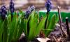 ВБотаническом саду намерены перерабатывать пищевые отходы