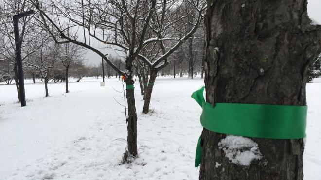 Активисты обвязали деревья в парке Сахарова зелеными ленточками