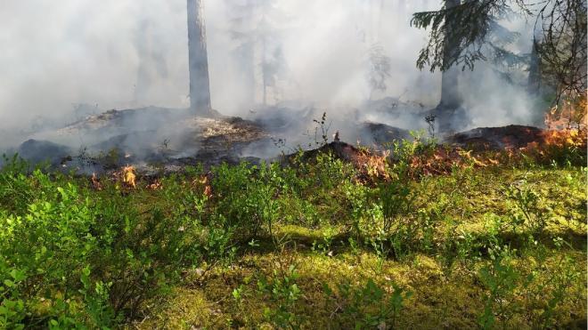 Петербуржцы заметили пожар в лесу Приозерского района