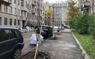 Петербуржцы высадили липы на улице Некрасова