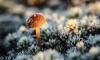 В начале недели в Ленобласти резко похолодает