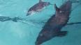 Морское шоу, Дельфинарий