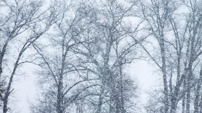 МЧС: В Ленобласти и Петербурге ожидается метель и сильный ветер