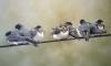 В Ленобласти энергетики устанавливают экологичные и безопасные для птиц провода