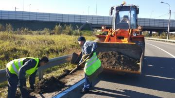 В сентябре с улиц Петербурга вывезли 11,5 тысяч тонн ...