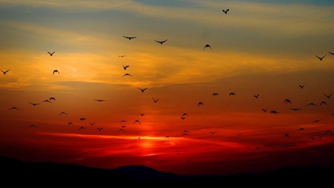 Над Петербургом сгустились тучи из перелетных птиц