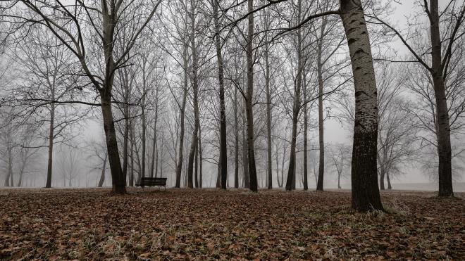 В МЧС Ленобласти вновь предупредили о тумане и низкой видимости на дорогах