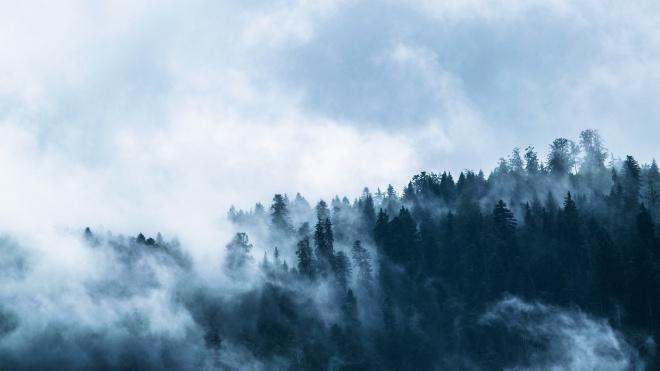 Надвигается мгла: среда в Выборге начнется с затяжных туманов