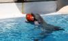 Артисты Петербургского дельфинария скучают по гостям на самоизоляции