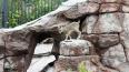 В Московском зоопарке впервые родился ягненок редкого ...