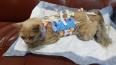 Студенты ЛГУ рассказали о состоянии избитой кошки