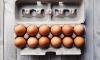 Причиной отравления 17 детсадовцев в Шушарах стали яйца из Мордовии