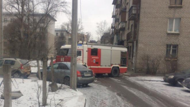 Сотрудники МЧС спасли из горящей квартиры на Московском шоссе пять кошек
