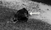 Фото иероглифов на поверхности Марса шокировало уфологов