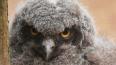 В Ленинградском зоопарке на свет появились совята