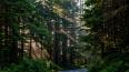 Полицейские нашли заблудившегося в лесу под Гатчиной ...