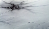 Петербуржец навеселе провалился под лед Мойки, но не сильно расстроился